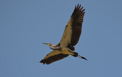Berti in Zhemgang Bhutan is home to White Bellied Heron one of world's critically endangered birds